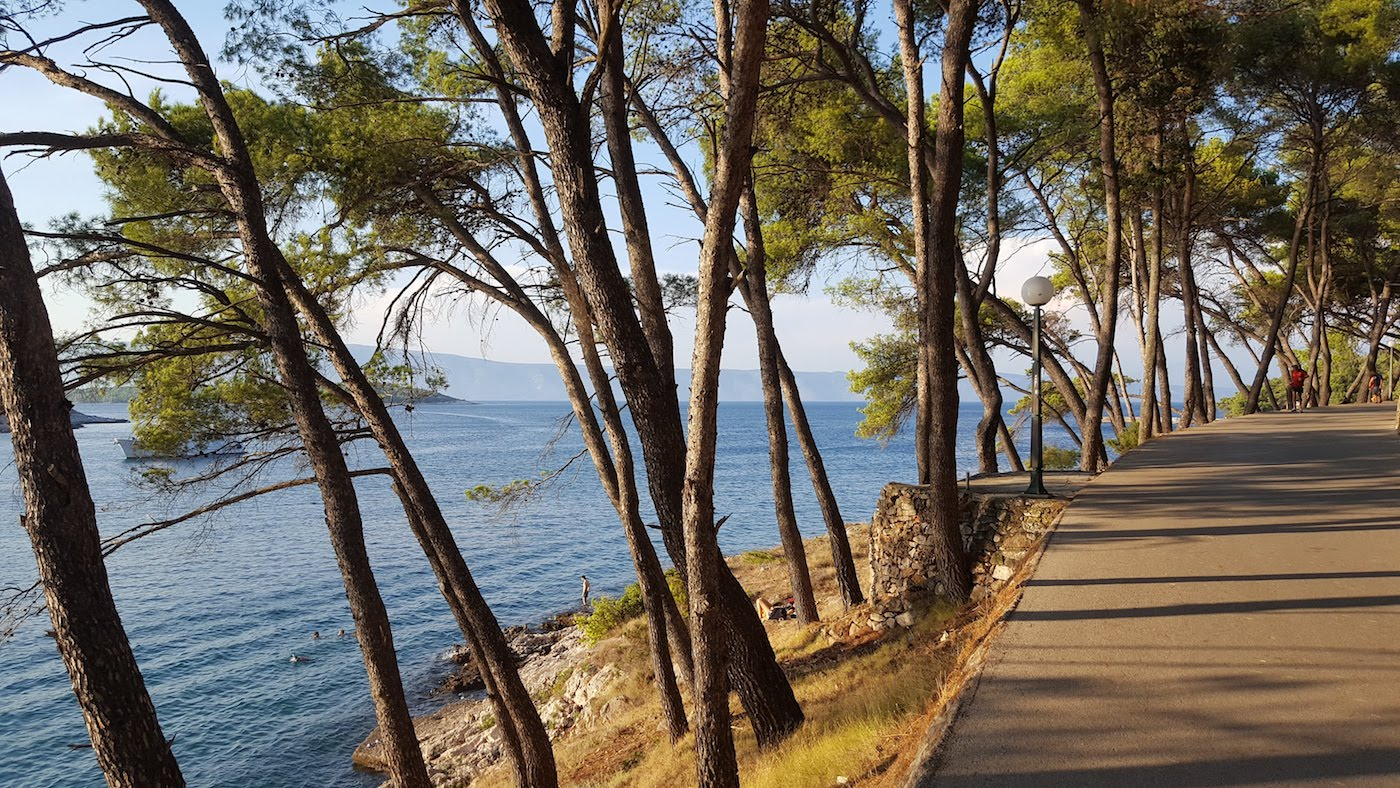 Ocean and pine trees on the Dalmatian coast